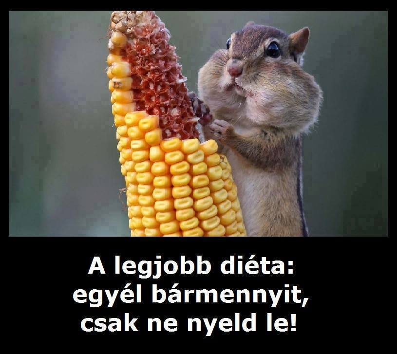 fogyókúrás vicces képek A legjobb fogyókúra! | URSULA fogyókúrás vicces képek